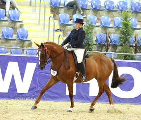 """Belinda Croon's entry in the M.R. BREECHES Small Saddle Horse event """"Benbella Power N Spunk""""."""