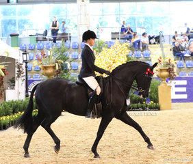 """Ava Halloran and """"DS Tulara Fursandro"""" placed 3rd in the M.R. BREECHES Small Saddle Horse event."""