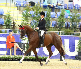 """Felicity Radley's entry in the M.R. BREECHES Small Saddle Horse event """"Bella Carmena"""" finished in the Top 10."""