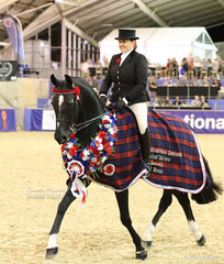 """Briony Randle and """"Santa Fe"""" enjoying their victory lap as the M.R. BREECHES Small Saddle Horse Grand National Champion."""
