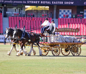 Second placegetters in the Four-wheeled Turnout Team of Two Heavy Horses Heather Kemp and Phillip Oxenham's entry with Benwerrin Park Prestige and Benwerrin Park Clare'.
