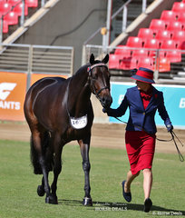 Sarah Malcolm's entry 'Top Shelf Envy' placed fourth in the ANSA Saddlehorse Mare, 4yrs & over, over 15hh class.
