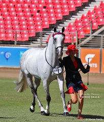 Mackenzie Peterkin's 'New World Ministry' placed 5th in the ANSA Saddlehorse Mare, 4yrs & over, over 15hh class.