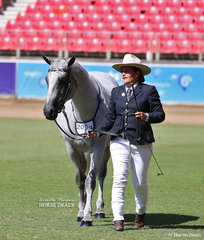 Second placegetter in the ANSA Saddlehorse Stallion, 4yrs & over, over 14hh went to Chantelle Vella's 'Cunnoo Denstinys Blueprint'.