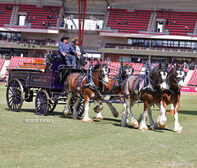 Murroka Clydesdales & Denmore Mark with 'Tullymore Sir Thomas' / 'McMurchie Ingram' won the Four-wheeled Turnout Team of Three or more Horses class.