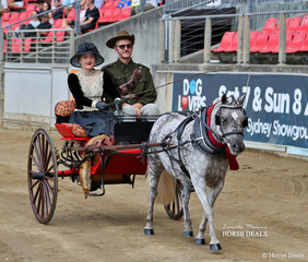 Fourth placegetters in the Authentic Period Turnout Fiona Archer and 'Toffee Dapple'.