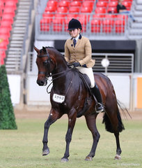 Sarah Samsa's 'Melva Park Royalty' placed fifth in the Novice Show Hunter Hack, over 16hh & n.e. 16.2hh class.