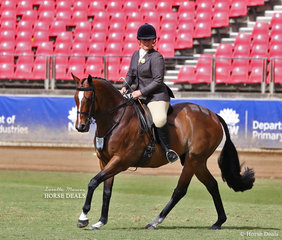 Pictured working out in the Show Hunter Hack ring 'Amanda Williams and 'Recife Beach'.