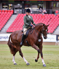 Rachel Wessel and 'Bella Rossa' placed fifth in the  Lady's Show Hunter Hack class.