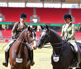 Sweet moment in the Lady's Show Hunter Hack line up as they wait for the class winners to be announced. On the left is third place getter Andrea Goldrick and 'EBL His Royal Highness'. On the right is fourth placegetter Mel Waller and 'Reuben Star'.