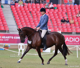 David Hall rode Penny Gibson's 'Seasons Park Vogue' in the Gents Show Hunter Galloway class.