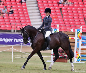Second place getter in the Lady's Show Hunter Galloway is Mia Skinner & 'Inverdale Winds Of Change'.
