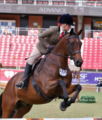 'Rainwood Park Melaleuca' exhibited by Abby Douch pictured competing in the Working Hunter, over 15hh class.