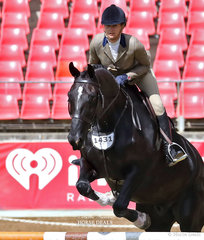 Mellissa Gillies' entry 'Beyond Reasonable Doubt' placed 4th in the Working Hunter over 15hh class.