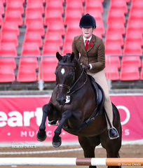 Sixth placegetter in the Working Hunter over 15hh 'Stony Creek' exhibited by Holly Jacobson.