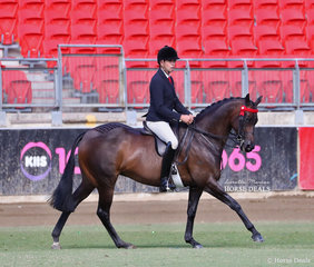 Crane Trophy winner 'Royal Highness', exhibited by Romsey Park and Emily Murray - ridden by Greg Mickan.