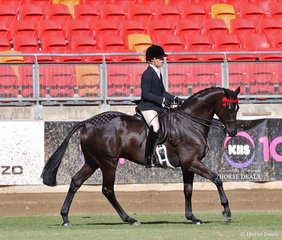 Cassie Schmidt and Universal Stables entry 'Rivalry' won the Col A V Pope Cup for the Best Gelding Hack over 15hh showing Thoroughbred qualities.