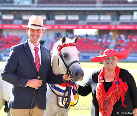 Champion Arabian Derivative Stallion or Colt went to the PAE Group's entry 'Riverglen Zion', owned by Riverglen Pony Stud. Led by Mark Lilley, pictured with Arabian Derivative judge Narelle Kinnear.