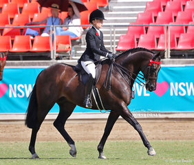 'Under The Lights', exhibited by Haynes, Quayle and McDowall placed fifth in the Open Hack, over 16hh & n.e. 16.2hh class.