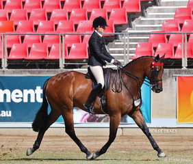 Competing in the Open Hack, over 16hh & n.e. 16.2hh class 'Polynikes', exhibited by Cassandra Schmidt.