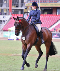Scott and Rachel Wessel's entry in the Open Hack, over 16.2hh class 'Santino', ridden by Rachel Wessel.
