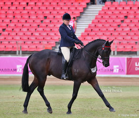 Competing in the Open Hack, over 16.2hh class is Deanne Pinney's entry 'Manowood'.