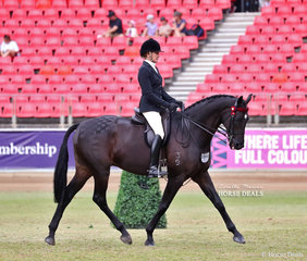 'New Orleans' exhibited by Peta Plozza placed sixth in the Open Hack, over 16.2hh class.