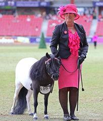 Winner of the Miniature Pony Filly, 3yrs class Patricia Mackaway's 'Grassdale RT Sleeping Beauty'.