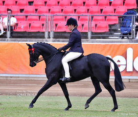 Competing in the Novice Pony, over 13.2hh & n.e. 14hh class is Arabella Fleming's entry 'Bamborough Atomic'.