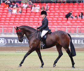 Compteting in the Lady's Hack class 'Divinity', the entry of Mark Kenzig and Hollie Hildebrandt.