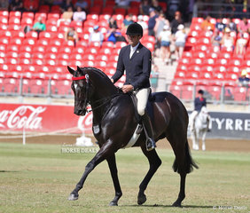 Open Hack, over 15.2hh & n.e. 16hh class winner 'Givenchy', exhibited by Romsey Park and Sue Thompson, ridden by Greg Mickan.