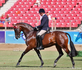 Second placegetter in the Gentleman's Hack, over 15hh. To be ridden by a Genleman 17yrs & over class is M & M Performance Horses, Pavia and Samsa entry 'TS Dante', ridden by Mark Kiddle.