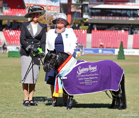 Supreme Champion Minature Pony 'Joemoor Sapphire' owned by Lori Howell and Jo Moore, pictured with Minature Pony judge Susan Allfrey.