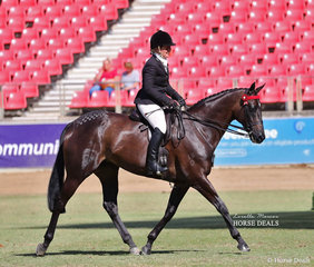 Amelia Refalo's entry 'DP Giselle' pictured working out in the Lady's Hack class, ridden by LeeAnn Olsen. Earlier in the day 'DP Giselle' placed fourth in the Open Hack, over 15.2hh & n.e. 16hh class.