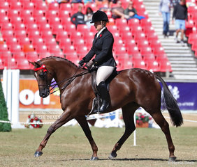 Sixth placegetter in the Lady's Galloway class 'Kolbeach Holly's Knowing'. Exhibited by Harper-Purcell, Duddy, De Jong, Bennett and Hall, ridden by Kirsty Harper-Purcell. .