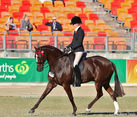 Competing for Champion Hack is the Open Hack, over 15hh & n.e. 15.2hh class winner 'Royal Oak Foreign Affairs' , exhibited by Emma Barkla and Ali Berwick.