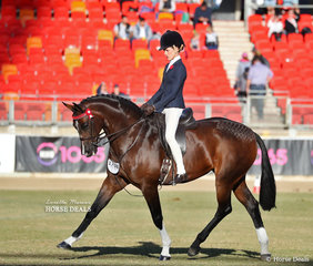 Pictured during their Champion Hack workout is the Child's Hack class winner 'EBL Quiver' ridden by Elizabeth Taylor, owned by Emily Mears.