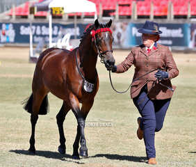 Hannah Rautman's 'Doncasvan Sequel' placed third in the Australian Pony Mare, 4yrs & over, over 12hh & n.e. 12.2hh class.