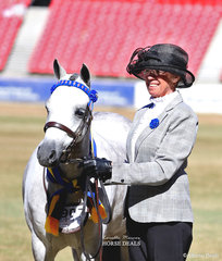 Reserve Champion Australian Pony Mare was Kim and Michael Rath's 'Amaranda Jazz'.