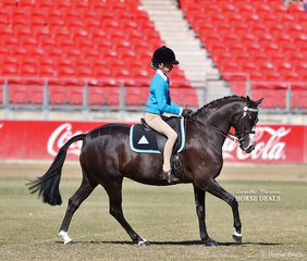 Ebony Lindsay riding 'Kennallywood Mr Clooney' in the Pony Club Rider 11 & under 13 years class.