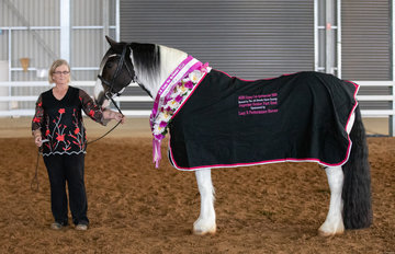 Sue Mouat and the lovely Glyndower Brea Wingsong had an extremely successful show, taking out both the Supreme Senior Part Bred Gypsy Cob and the Grand Supreme Part Bred of the Show.