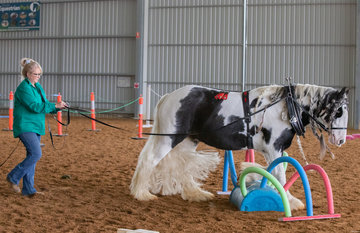 Lee Scown and Marindy Take a Piece of My Heart – proof that gorgeous hair and trainability are all part of the Gypsy Cob allure
