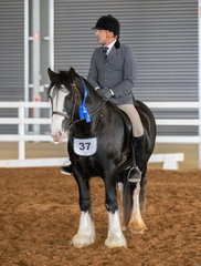 Clint Bilson guided Eden Fields Outlaw through a successful first show under saddle. A stellar performance for a young and upcoming pure bred.