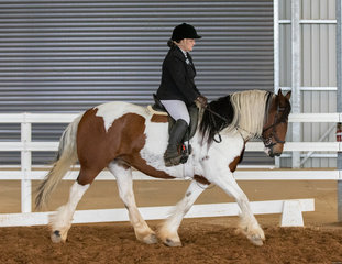 Eliza Moore and part bred Keeralee Adira brought home a swag of ribbons across the weekend and had great results in the ridden classes