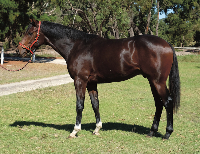 15.2½hh, 2yo, gelding. Hasn't commenced any work.
