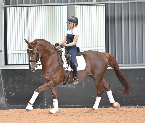 """Ride forward and keep the contact. The shoulder in (at trot and canter) will keep him more on the hind legs. Inside leg to outside rein."""