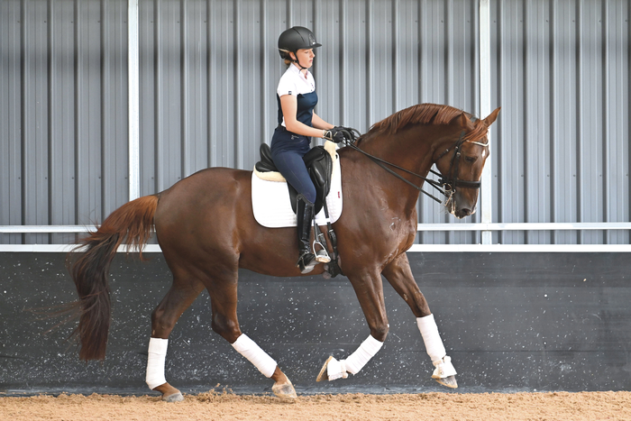 "During the lesson, Briana asked Louisa to WAIT often enough that it became an integral part of the lesson. ""Contact and balance; make him wait and keep him in the contact before you ask for a flying change."" It really brought home how much patience and feel have to do with good riding."