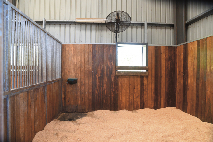 Even though the floor is rubber, Mark still likes a generous covering of bedding to make the horses comfortable and encourage them to lie down. All the boxes are wood lined, as it is more forgiving if kicked etc. Interestingly, both in the stables and out in the paddocks, there is no sign of chewing or kicking the walls or fences. These horses are happy to be here.