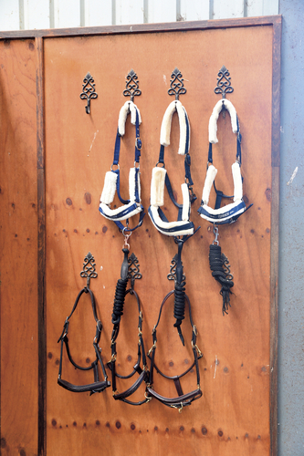 Everything at Woodside Stables is kept in order and beautifully maintained.