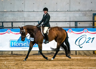 Dark N Sultry owned by Sue Williams & shown in the hack over 15hh by Barbara Jones.